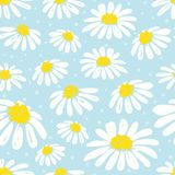 Seamless daisy pattern. Vector background with white chamomiles. On blue Royalty Free Stock Image