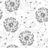 Seamless dandelion pattern,  seamless background Stock Photography
