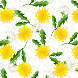 Seamless dandelion pattern vector. Stock Image