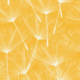 Seamless dandelions pattern Stock Photography