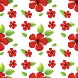 Seamless design with red hibiscus flowers Royalty Free Stock Image
