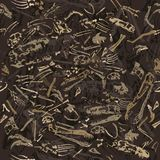 Seamless dinosaur bones pattern. Seamless grungy dinosaur bones in ground Royalty Free Stock Photography