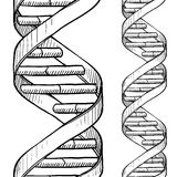 Seamless DNA double helix sketch. Doodle style DNA double helix seamless vector background or border Stock Images