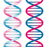 Seamless DNA Symbol. On white background. Vector Illustration Stock Images