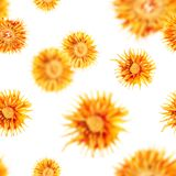 Seamless dried flowers pattern. Seamles dried orange flowers pattern as a background texture Royalty Free Stock Photos