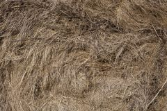 Seamless dry grass background. Nature themes. Seamless dry yellow grass background. Nature themes Royalty Free Stock Photo