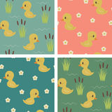 Seamless ducks  wallpapers Stock Photos
