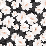 Seamless elegant pattern with flowers roses Stock Image