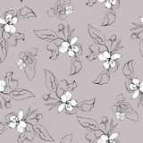 Seamless elegant pattern sketch of apple flower. Royalty Free Stock Image