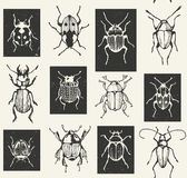 Seamless entomological vector pattern with  bugs Royalty Free Stock Photo