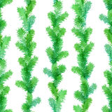 Seamless evergreen pattern. Royalty Free Stock Image