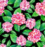Seamless exotic floral pattern, pink camellias and tropical leav. Very detailed watercolor elements, drawn by me. pink roses and ficus and mint leaves Royalty Free Stock Images