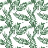 Seamless exotic pattern with palm leaves. Vector hand draw illustration Stock Image