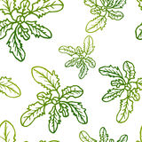 Seamless exotic pattern with tropical leaves on a white background. Stock Image