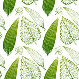 Seamless exotic pattern with tropical leaves on a white background. Royalty Free Stock Photo