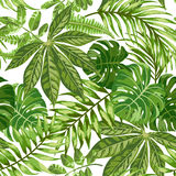 Seamless exotic pattern with tropical leaves Royalty Free Stock Photo