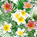 Seamless exotic pattern with tropical plants. Big plumeria flowers with palm leaf. Vector illustration. stock illustration
