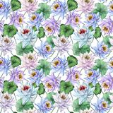 seamless exotisk modell Härliga lotusblommablommor med gräsplansidor på vit bakgrund illustratören för illustrationen för handen  Fotografering för Bildbyråer
