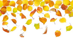 Seamless falling autumn leaves Royalty Free Stock Photography