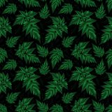 Seamless fern pattern Stock Photo