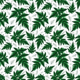 Seamless fern pattern. Illustration of seamless floral pattern with fern branches isolated Royalty Free Stock Photos