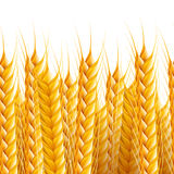 Seamless Field Background Stock Images