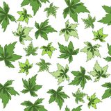 Seamless figure green leaves Royalty Free Stock Photo