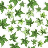 Seamless figure green leaves. On white background stock illustration