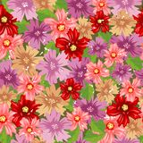 Seamless floral background. Background with daisies Stock Photos