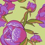 Seamless floral background with peonies Stock Photo