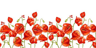 Seamless floral background with red poppy Royalty Free Stock Images