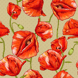 Seamless floral background with red poppy Royalty Free Stock Image