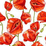 Seamless floral background with red poppy Stock Photo
