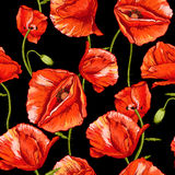 Seamless floral background with red poppy Stock Image