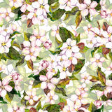 Seamless floral background with sakura flower - cherry blossom. Watercolor drawing Royalty Free Stock Photography