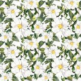Seamless floral background wallpaper with white flowers. Aquarelle painting Royalty Free Stock Image