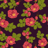 Seamless floral background with wild rose Stock Photography
