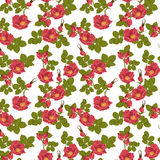 Seamless floral background with wild rose Stock Photos