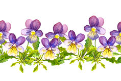 Seamless floral border band with viola flowers on white background Royalty Free Stock Photo