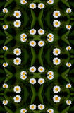 Seamless floral camomile pattern. Royalty Free Stock Photos