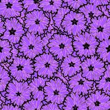 Seamless floral daisy flowers pattern. Background Royalty Free Stock Photos