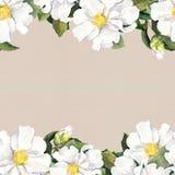 Seamless floral frame - white flowers. Aquarelle border, paper texture Royalty Free Stock Photo