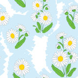 Seamless floral light vector pattern with camomile Stock Photography