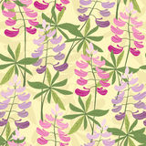 Seamless floral lupine pattern Stock Images