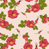 Seamless floral ornament  with wild rose Stock Photography
