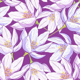 Seamless floral pattern. With crocus Royalty Free Stock Image