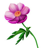 Seamless floral pattern with anemones flowers Stock Photos