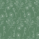 Seamless floral pattern, Calendula flower isolated on green background, botanical hand drawn doodle vector illustration Royalty Free Stock Images