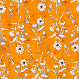 Seamless floral pattern, Calendula flower isolated on irange background, botanical hand drawn doodle vector illustration Royalty Free Stock Photos