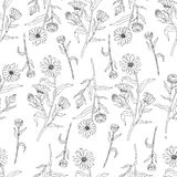 Seamless floral pattern, Calendula flower isolated on white background, botanical hand drawn doodle vector illustration Stock Photos